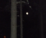 The moon through the trees