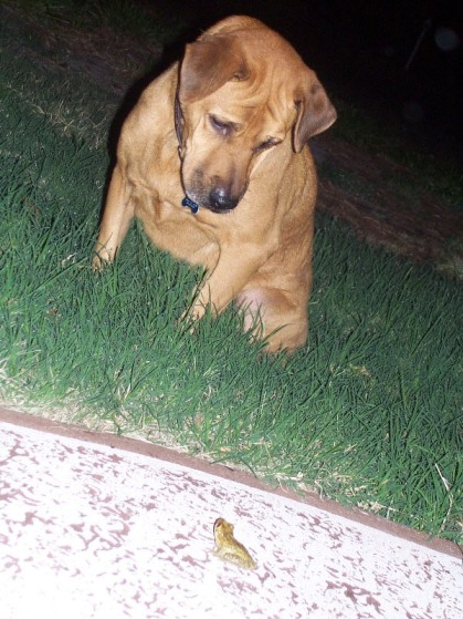 Charlie and the Frog in a stare-down